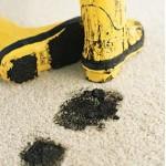 carpet_spot_clean_inspector